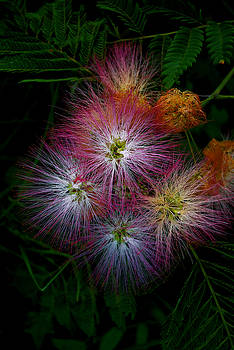 Prickly Flower by Christopher Lugenbeal