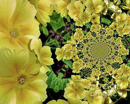 Primrose Flowers Abstract by Smilin Eyes  Treasures