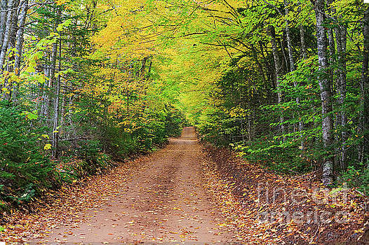 Prince Edward Island Clay Dirt Road by Verena Matthew