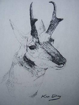 Pronghorn Antelope by Ken Day