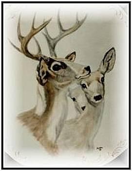 Pronghorn Antelope by Sandra Maddox