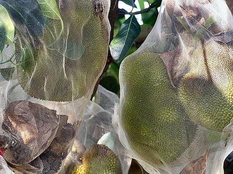 Protect your Durian by Kathy Daxon