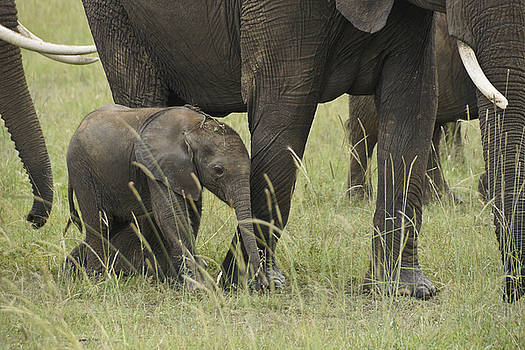Michele Burgess - Protecting the Little One
