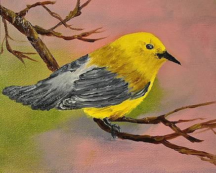 Prothonotory Warbler by James Higgins