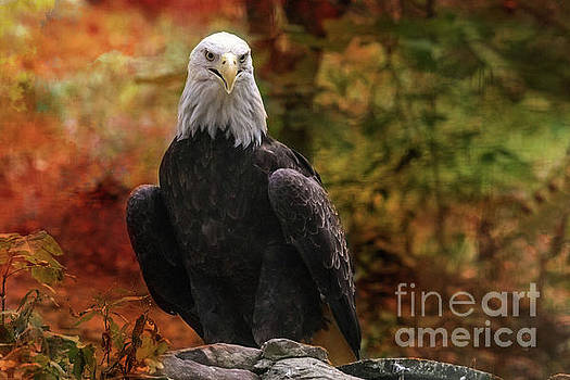 Proud Eagle by Geraldine DeBoer