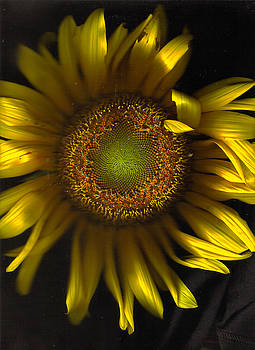 Proud Fun Sunflower by Kevin Caudill
