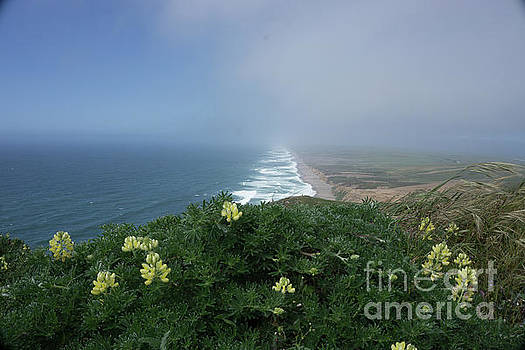 Pt. Reyes Coastline by Terry Lynn Johnson