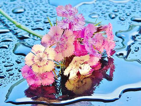 Puddle of Sweet Williams by Barbara St Jean