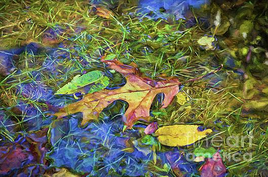 Puddle Wonderful by Kerri Farley New River Nature