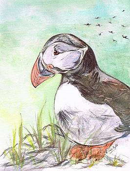 Puffin Bird- On The Cliff Top by Teresa White