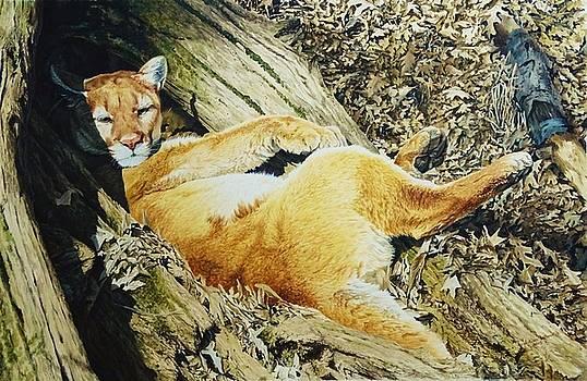 Puma by Julian Wheat