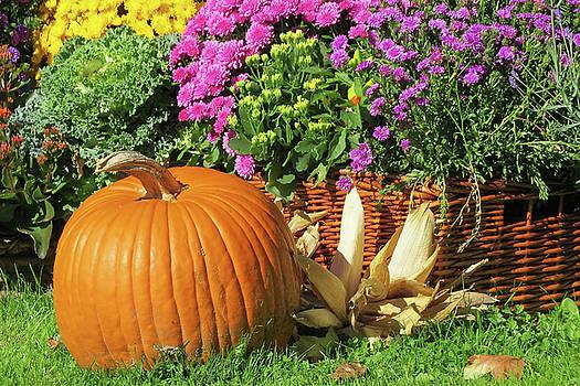 Pumpkin by Jim Nelson