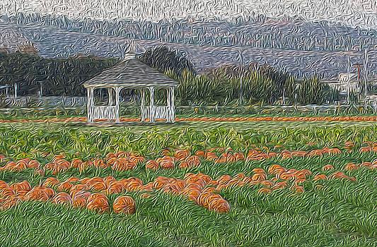 Pumpkin field by Jessica Nguyen