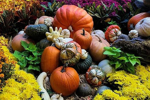 Pumpkin patch by Tammy Espino