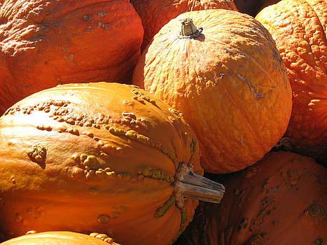 Pumpkin shadows by Cindy Plutnicki