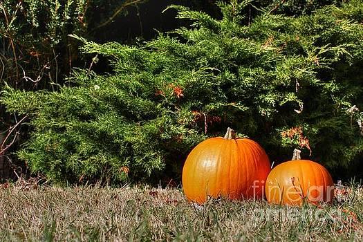 Pumpkins by Vicki Spindler