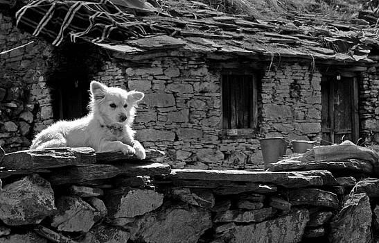 Puppy by Santosh Jaiswal