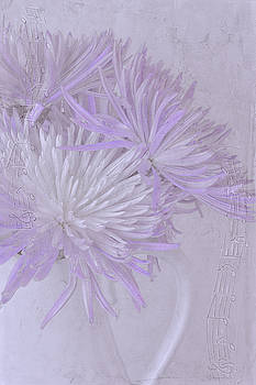 Purple And White Mums by Sandra Foster