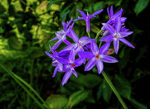 Purple Cluster by Dave Bosse
