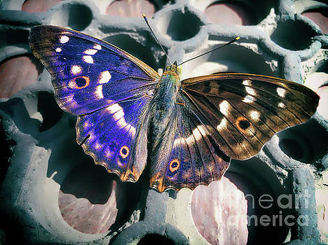 Purple Emperor by Kasia Bitner