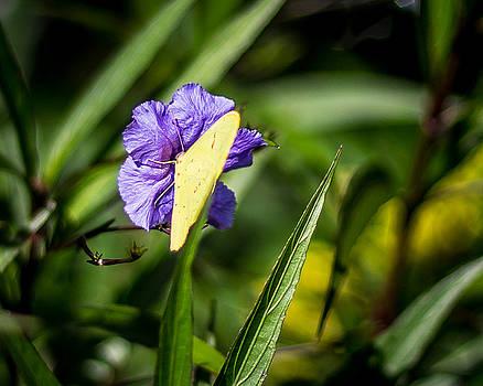 Purple Flower Butterfly by Brent Paape
