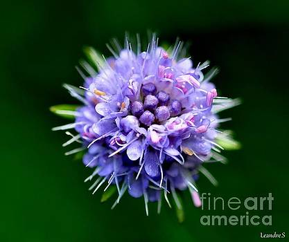 Purple Flower by Sylvie Leandre