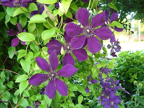 Purple Flowers by Gonca Yengin