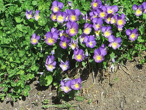 Purple flowers by Margarete M Kedl
