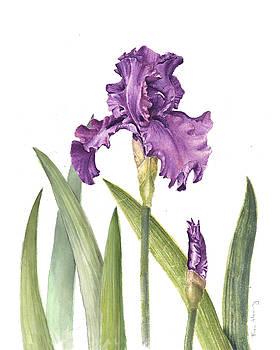 Purple Iris by Fran Henig