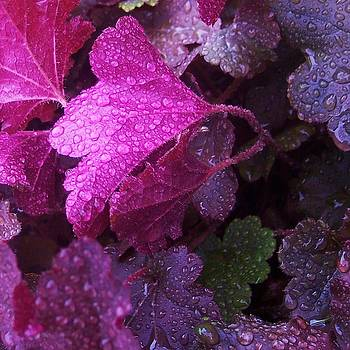 Purple Leaves by Anna Villarreal Garbis