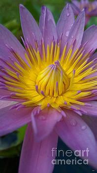 Purple Majesty by Cheryl Young