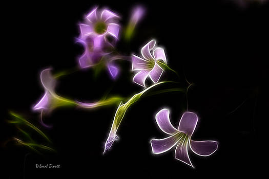 Deborah Benoit - Purple On Black