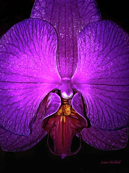 Donna Blackhall - Purple Orchid
