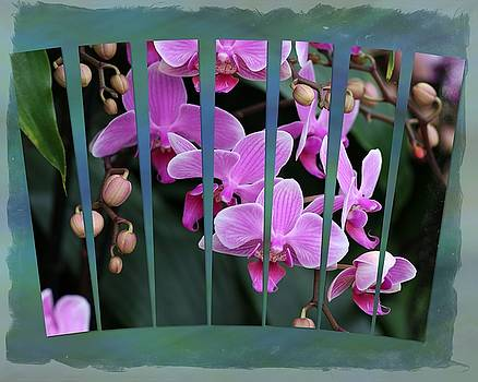 Purple Orchid Fan Display by Ron Grafe