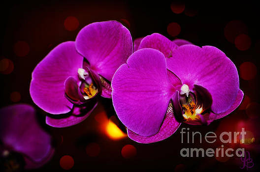 Purple Orchid by Mindy Bench