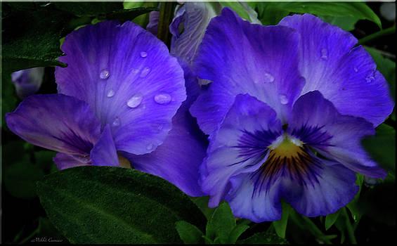 Purple Pansies by Mikki Cucuzzo