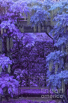 Purple Passion by Marilyn Cornwell