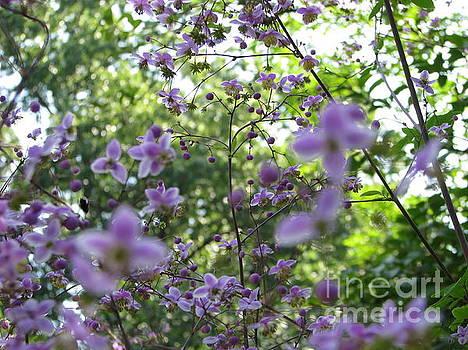 Purple Passion by Michael Krek