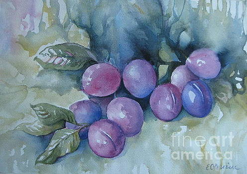 Purple plums by Elena Oleniuc
