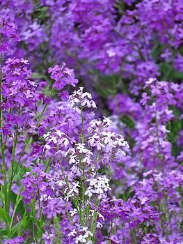 Purple Profusion by Lori Frisch