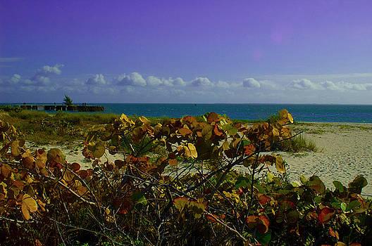 Purple Skies by Sheri Heckenlaible