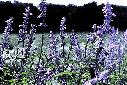 Purple Splendor by Kimberly  Brown