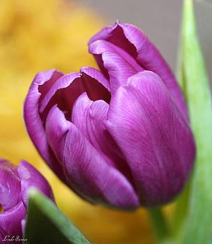 Linda Sannuti - Purple Spring