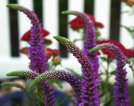 Purple sweetness by Bruce Carpenter