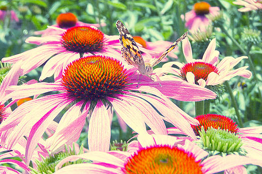 Angela Doelling AD DESIGN Photo and PhotoArt - Coneflower