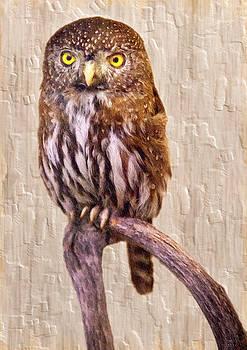 Pygmy Owl by David Millenheft
