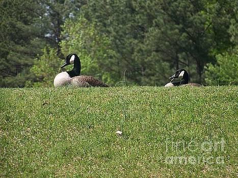 Quack Quack by Kevin Croitz