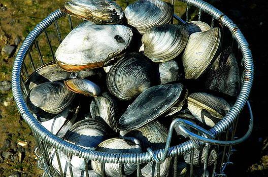 Quahogs And Clams  by Bruce Carpenter