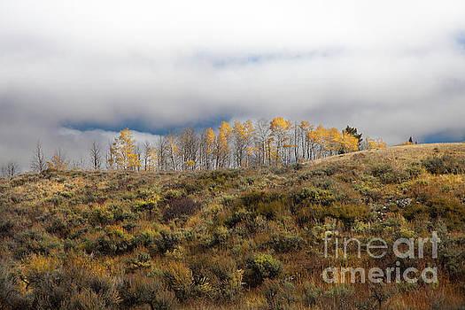 Quaking Aspen Tree Landscape, Grand Teton National Park, Wyoming by Greg Kopriva