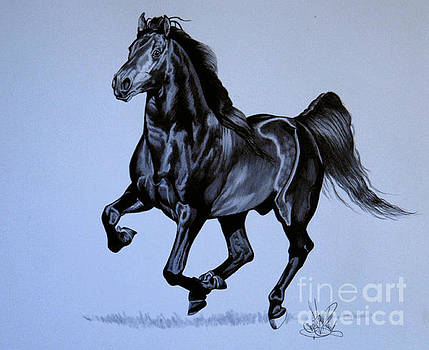The Black Quarter Horse in Bic Pen by Cheryl Poland